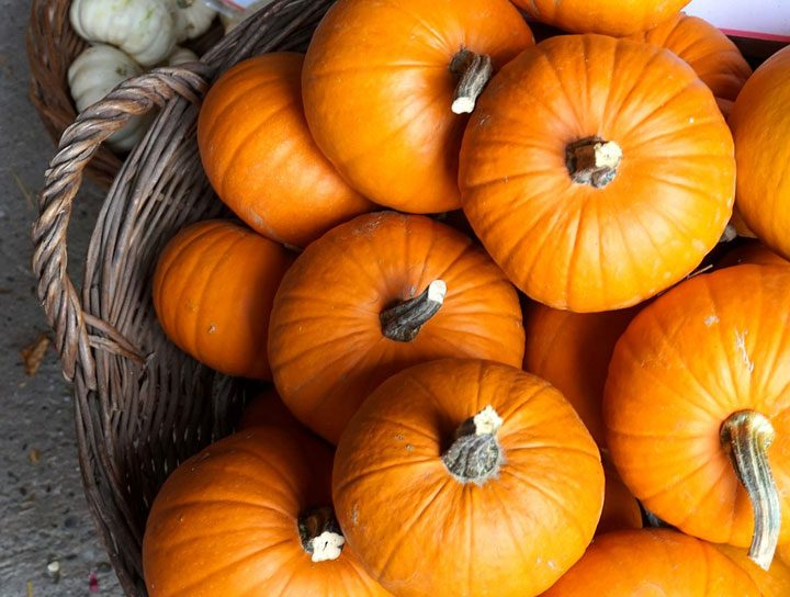 patch of pumpkins in basket overhead for fall autumn recipes